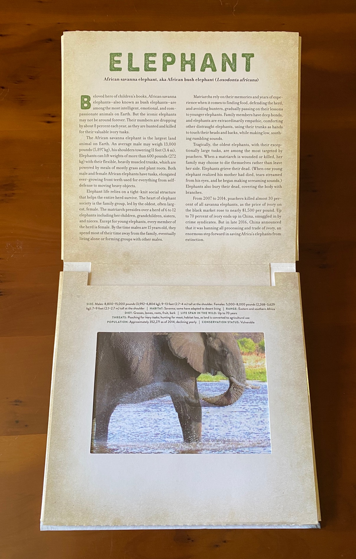 KATHY WOLLARD [CREATED BY DAN KAINEN] - Wild   Endangered Animals in Living Motion   A Photicular Moving Book